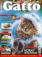 Gatto Magazine Digital 2017/18