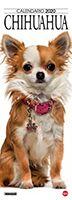 Copertina Il Mio Cane Compiega/Chihuahua n.8
